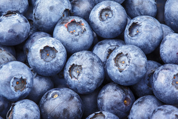 Closeup of freshly picked blueberry berries as background