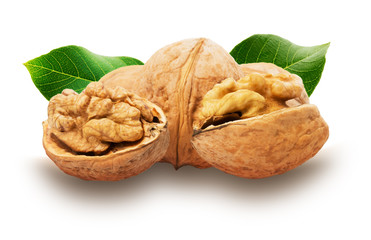 tasty walnuts isolated on the white background