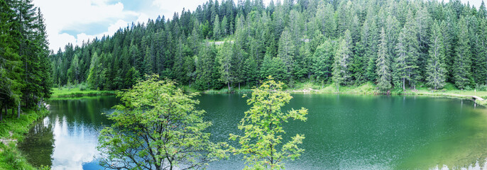 Alpin panoramic landscape. Lake with trees in summer season