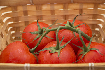 a basket of tomatoes with a sprig