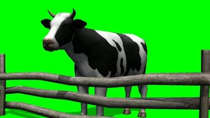 Cow on pasture - green screen