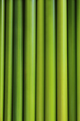 green sedge