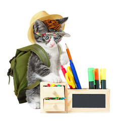 Hipster kitty goes to school
