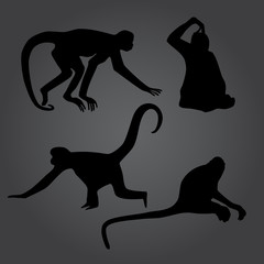 monkey shadows silhouette set eps10