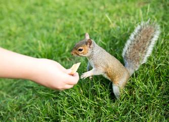 Nourrir un écureuil