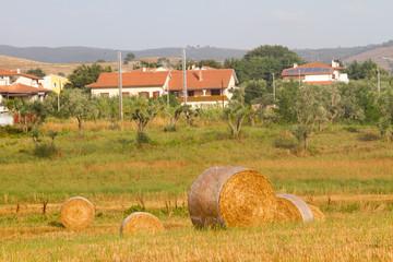 Hay field in Tuscany