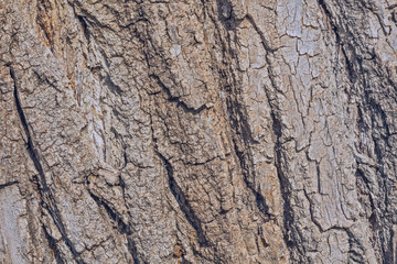 Texture - tree bark. Beauty bark.