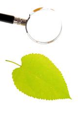 가을단풍 컨셉포토