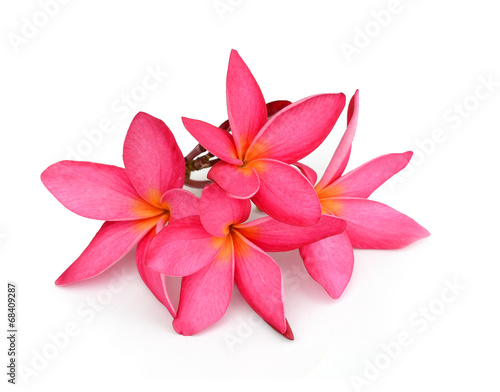 Aluminium Plumeria Tropical flowers frangipani (plumeria) isolated on white backgro