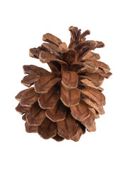 Pine or fir cone on a white background.