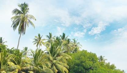 Equatorial forest ats blue sky