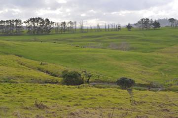 Farmland on North Island, New Zealand