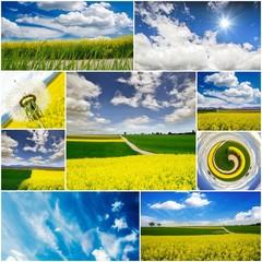 Landschaften in der Pfalz: blühende Rapsfelder :)