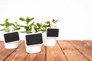 Small pot plants with empty name tags