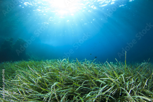 Staande foto Water planten Underwater background in sea