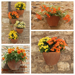 orange and yellow flowering plants in pots on antique stonewall