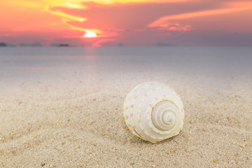Sea shells on sand beach with sunset background beach collection