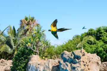Parrots, Loro Park, Tenerife