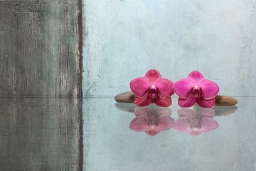 Zwei Orchideenblüten