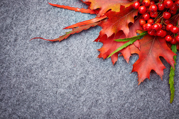 red rowan lying on autumn leaves.