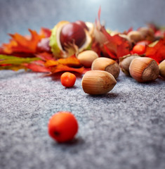 Nuts and berrys on grey autumn background