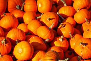 Autumn holiday - Halloween