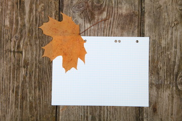 Maple leaf on a sheet of school notebook