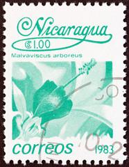 Malvaviscus arboreus flower (Nicaragua 1983)