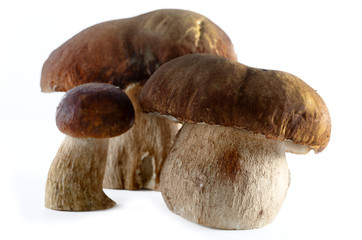 boletus  mushroom isolated on white background