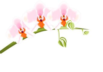 Orquídeas blancas y rosas