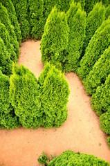tree labyrinth