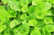 Obrazy na płótnie, fototapety, zdjęcia, fotoobrazy drukowane : Beautiful spring leaves on shrub, outdoors