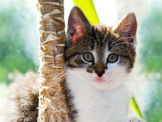 Katzenportrait, Katzenwelpe