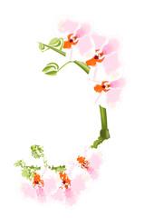Orquídeas blancas y rosas reflejadas