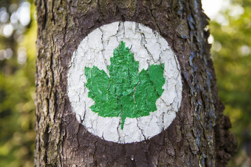 Ecology symbol - Green leaf sign painted on a tree trunk.