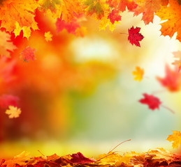 Autumn background with wooden planks