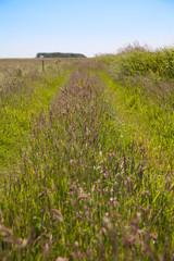 Wild Island Grasses