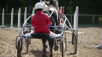 Harness Racing. rear view