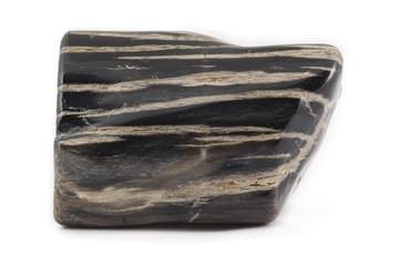 Petrified wood ancient piece black on side