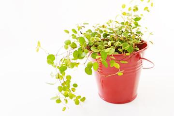 奇麗な観葉植物