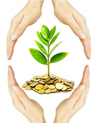hands holding a young tree growing on coins