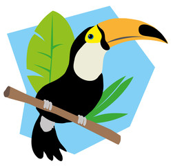 Tropical toucan bird fauna of Brazil