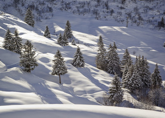 Mountainside in winter. Snow-covered spruce