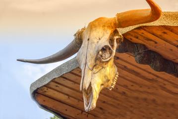 Cattle Skull Bull Longhorn Trophy