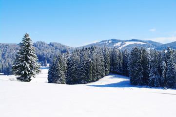 wunderschöne winterlandschaft mit wald