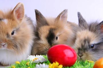 Drei Kaninchen hinter rotem Ei