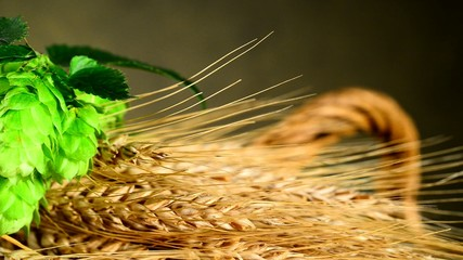 barley with hops cone, panning