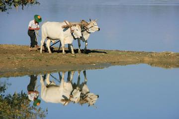 Local man working on a farm field near lake, Amarapura, Myanmar