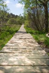 Preikestolen Boardwalk 2
