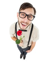 Geeky lovesick hipster holding rose